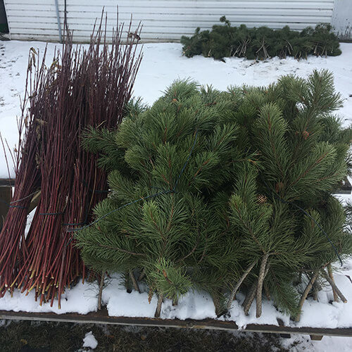 Winter crafting branches and pine boughs at Bow Point Nursery
