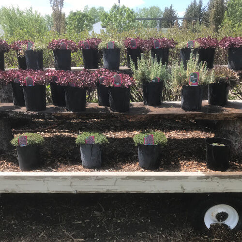 Potted plants for sale on a wagon at Bow Point Nursery