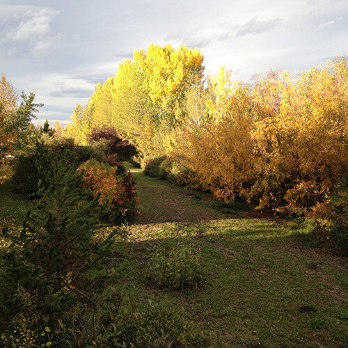 tree rows during fall time at Bow Point Nursery